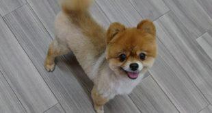 リタイヤ犬の笑みちゃん&コッコくん