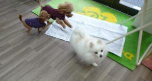 リタイヤ犬、みんな元気一杯です(^_-)-☆