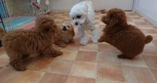 ふわり姉さんと仔犬達
