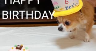 すみれちゃん6歳お誕生日おめでとう(#^^#)