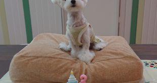 ふわりちゃん3歳になりました(*^▽^*)